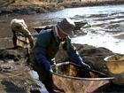 県立三ツ池公園の「下の池」、掻(か)い掘り1月7日~9日のイメージ